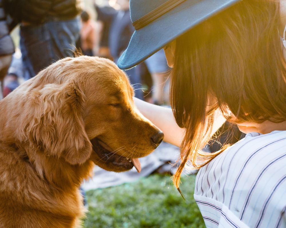 Gå en kurs med din hund